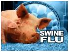 [Swine Flu]
